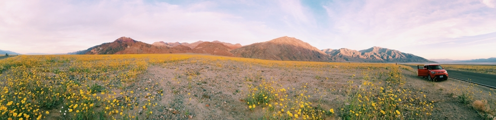 Super Bloom Death Valley California Wildflowers