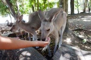 Wildlife Sanctuary Port Douglas