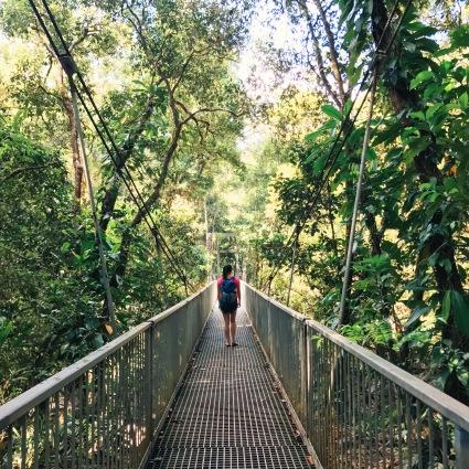 Mossman Gorge Rainforest Australia