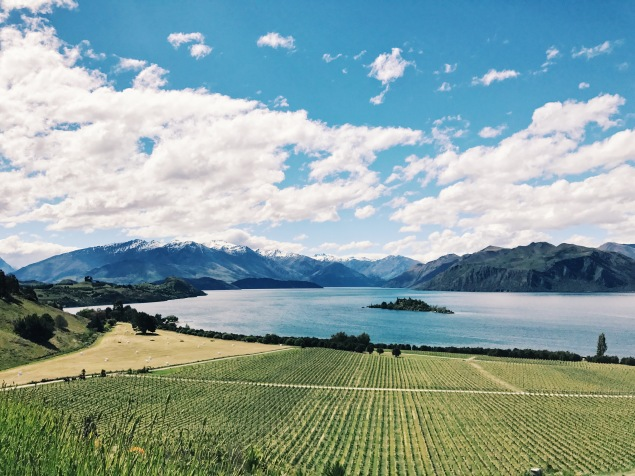 Rippon Vineyard Wanaka New Zealand
