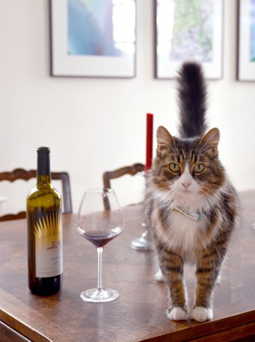villa ragazzi napa winery
