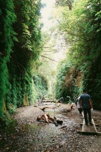 Fern Canyon California Redwoods