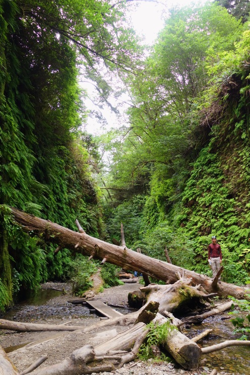 Fern Canyon California Redwoods