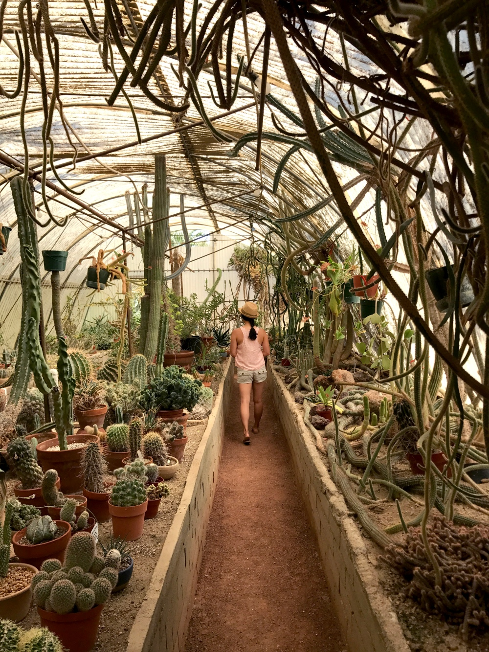 Moorten Cactus Garden Palm Springs