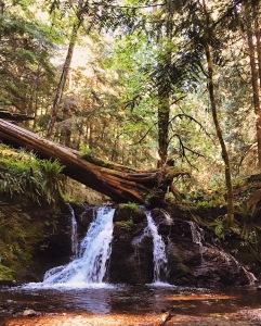 Rustic Falls Moran State Park