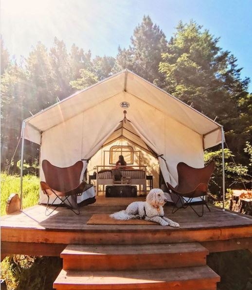 Buzz Favorites- Year 3: Mendocino Grove Glamping
