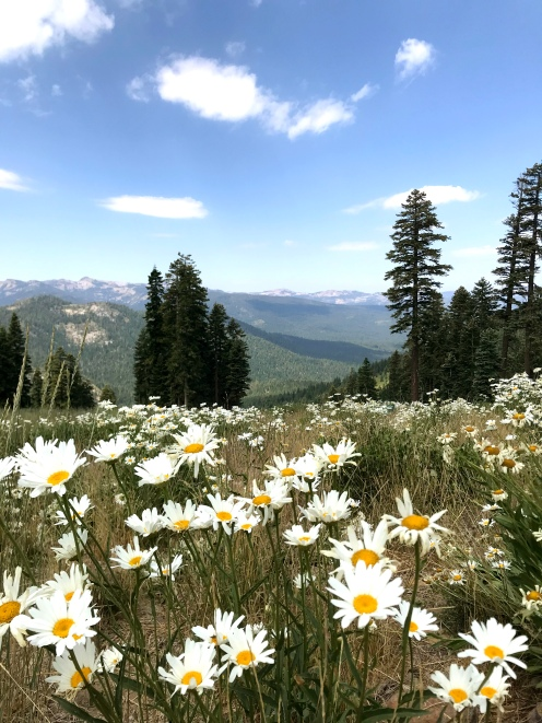 northstar california resort summer hiking