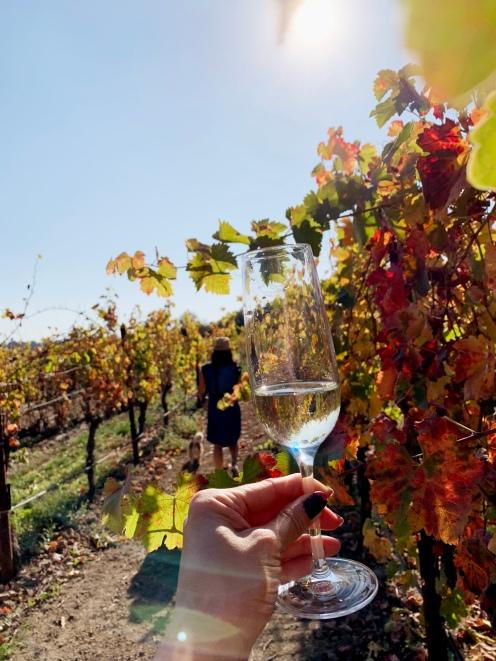 amista vineyards wine road healdsburg