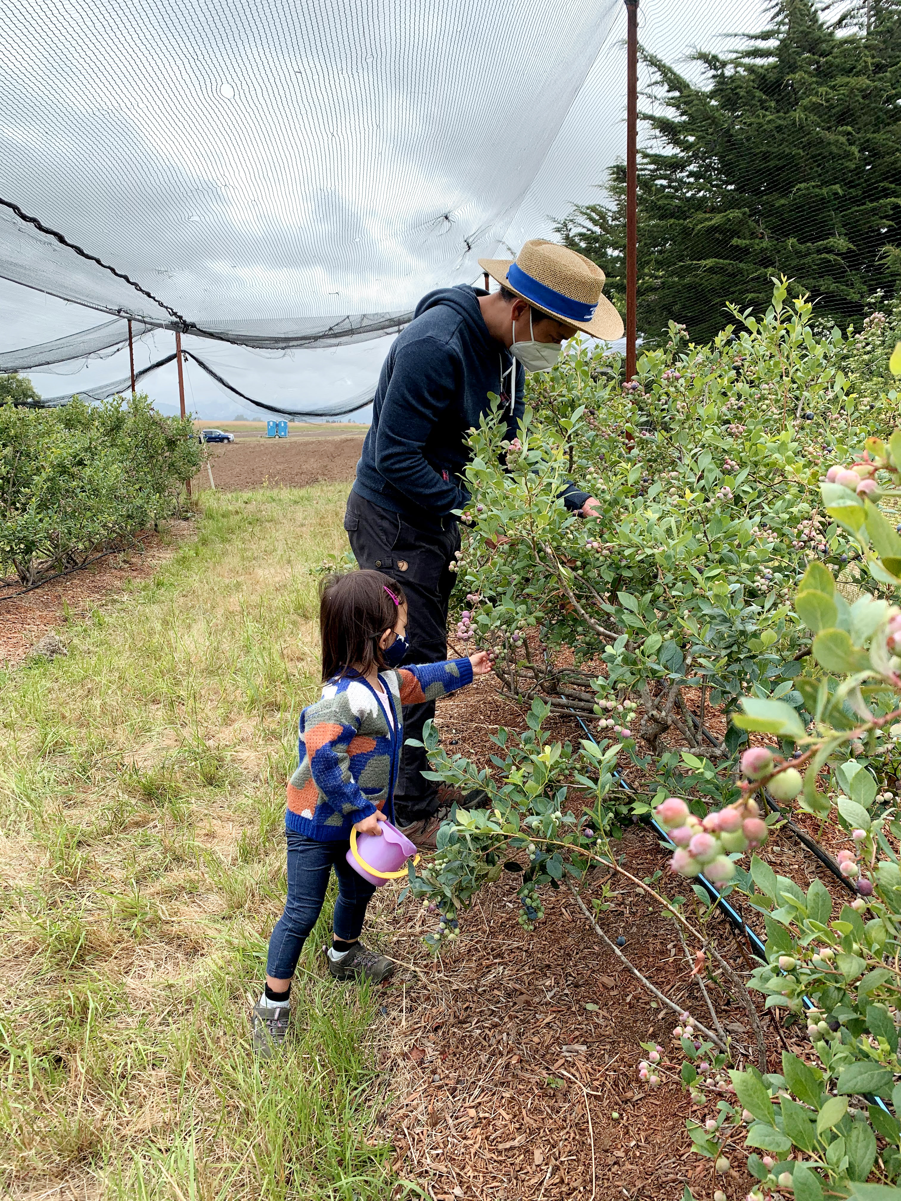 High Ground Organics U-Pick Blueberries Watsonville